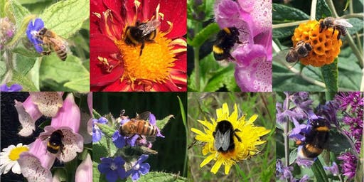 Bee Bonanza Family Fun Day