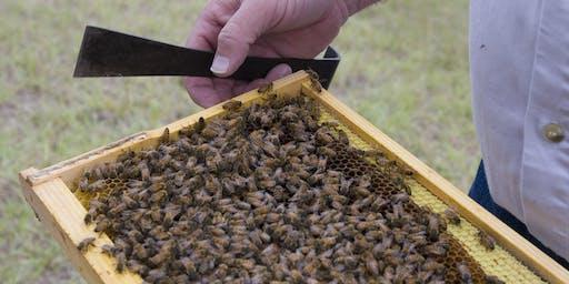 Brevard Beginning Beekeepers Workshop Series