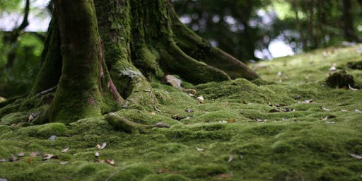 Creating and Caring for a Moss Garden