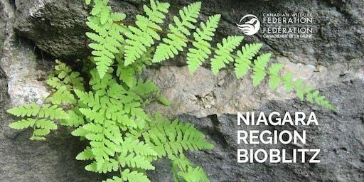 Niagara Region Bioblitz