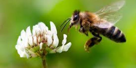 Tide of the Toddlers: Beneficial Pollinators tickets