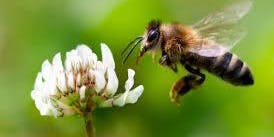 Tide of the Toddlers: Beneficial Pollinators