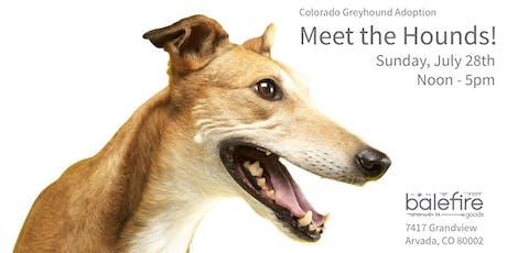 Colorado Greyhound Adoption: Meet the Hounds! tickets