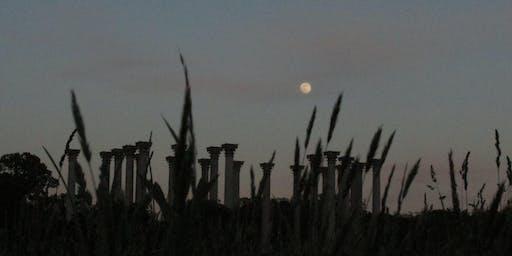 Friday, September 13 Full Moon - Forest Bathing