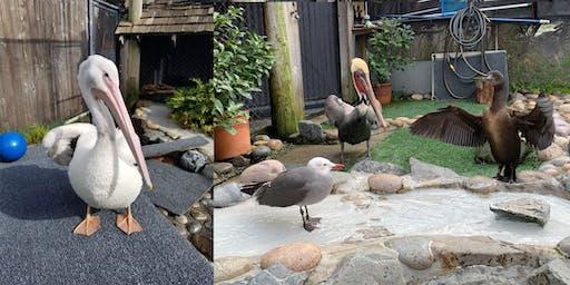 FREE Event - WildCare, Wine & Wildlife Reception - Pool (Bird) Party!