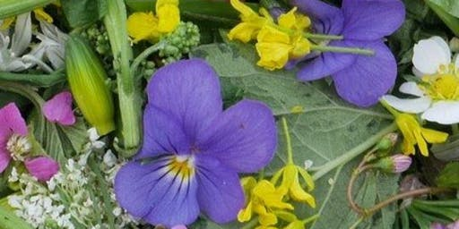 Edible Plant Walk, with Stephen Barstow