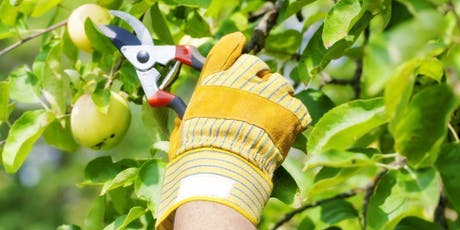 Fruit Tree Pruning tickets