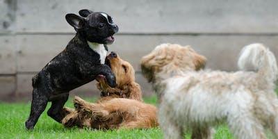Begeleide speelweide: Puppy