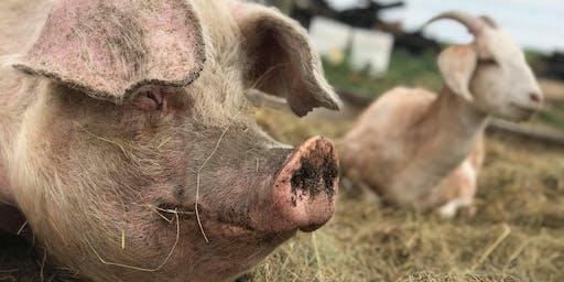 Peace & Pigs Yoga