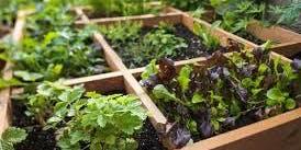"""Square Foot Gardening Workshop"""