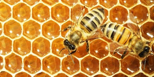 NBB monthly meeting - How to get your first bees