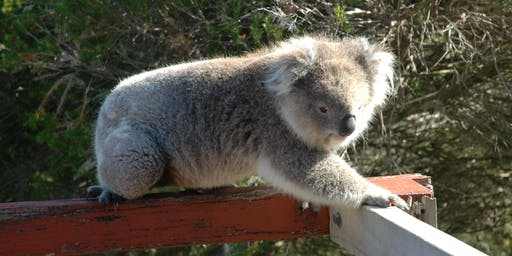 Sandy Point Community Koala Count 2019