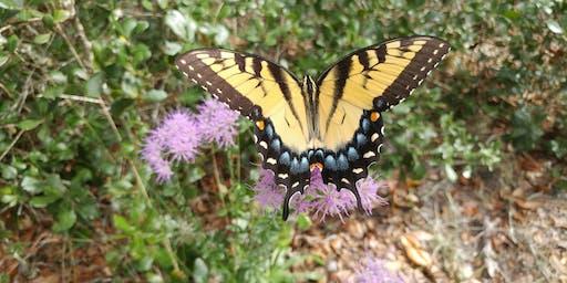 Butterflies of Brooker Guided Hike