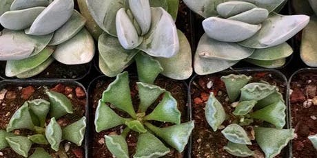 Succulent/Cacti Composition Workshop tickets