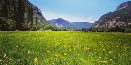 Re-Wilding: A Plant Spirit Medicine & Breathwork Retreat tickets
