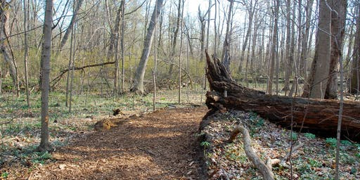 Winona - Nature Walk Essentials