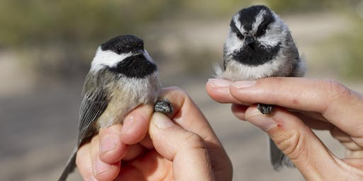 Fall 2019 Boise River Drop-in Songbird Banding