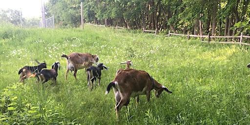 Sunday Night Goat Hikes