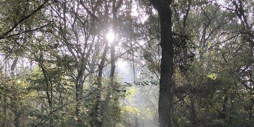 Aylesbury Buckinghamshire Autumn Wild Food Foraging Course/Walk