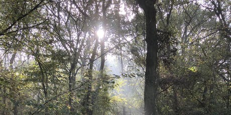 Aylesbury Buckinghamshire Autumn Wild Food Foraging Course/Walk tickets