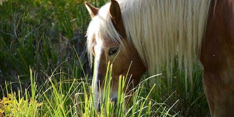 Un vespre entre cavalls lliures al Parc del Garraf entradas