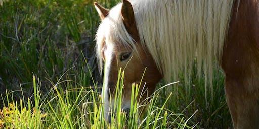 Un vespre entre cavalls lliures al Parc del Garraf