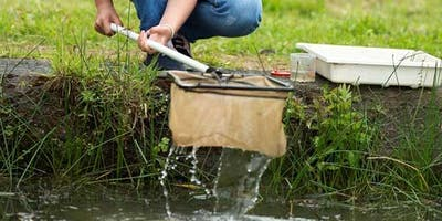 Pond Dipping and Mini-beast Hunt at RSPB Titchwell Marsh Reserve