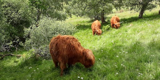 Field Lab: Mob Grazing. Benefits of tree fodder for animal nutrition