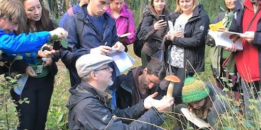 Medicinal Mushrooms Weekend Workshop with Fred Gillam
