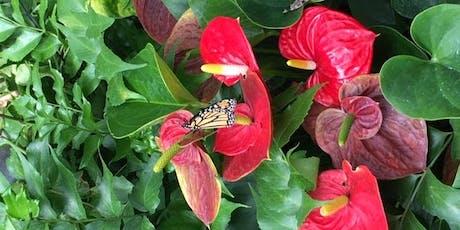 Butterflies at Blendon Woods (HHC) tickets