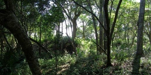 Guided Maritime Forest Hike
