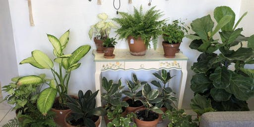 Summer Plant Swap at the House of Plants