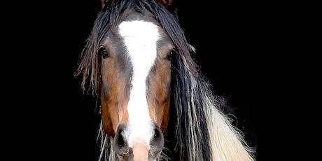 HorseDream Ausbildung zum Pferdecoach Tickets