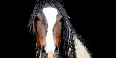 HorseDream Partner License Workshop Tickets
