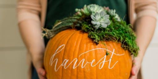 Pumpkin & Succulent Workshop