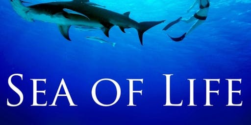 Sea of Life : Pells Pool Film Nights