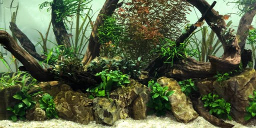 Learn to Aquascape with No Fear Gardening at Scaped Nature