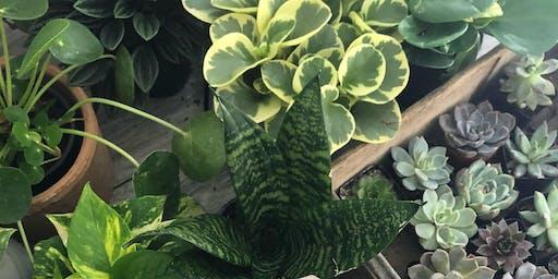 Sip, Shop & Plant