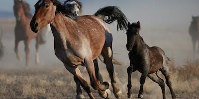 Hunt's Photo Adventure: Wild Horses in Utah