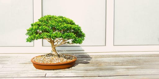 Cafe 25 | Bonsai Workshop