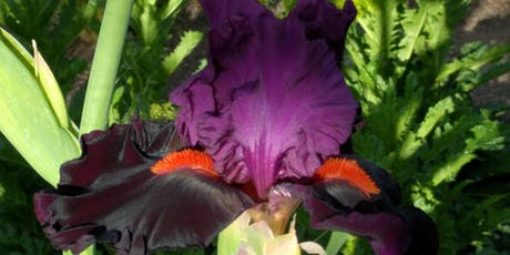 Mt. Diablo Iris Society Annual Iris Auction tickets