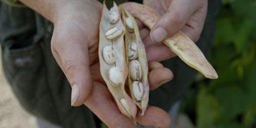 Our Need for Seed: Irish Seed Savers' Talk