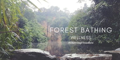 Forest Bathing Wellness @ Bukit Batok Nature Park