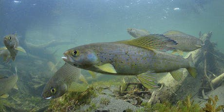 Ranch Rudolph Member Event, Michigan Grayling Reintroduction tickets