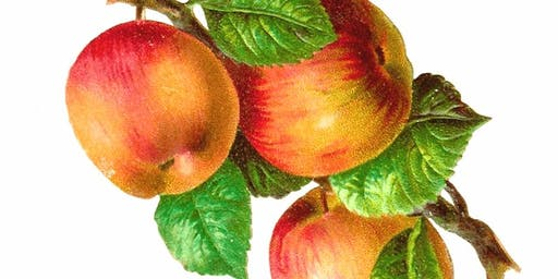Painting Apples: Botanical Illustration Workshop with Robin Jess Celebratin