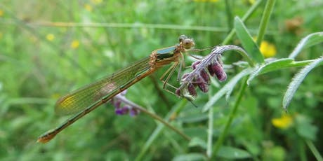 Damsels and Dragonflies: Afternoon Session tickets