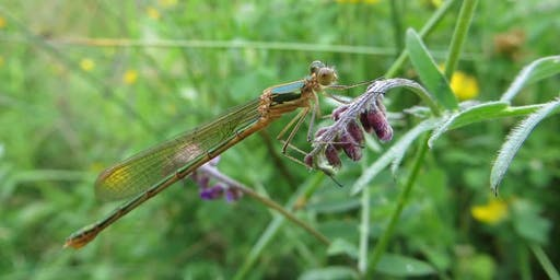 Damsels and Dragonflies: Afternoon Session