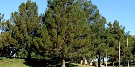 Midland Parks Tree Inventory Training