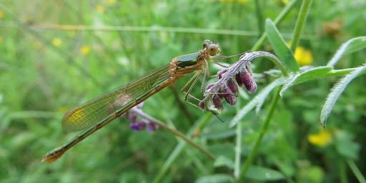 Damsels and Dragonflies: Evening Session