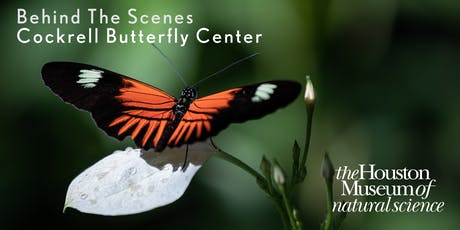 Behind The Scenes : Inside the Cockrell Butterfly Center tickets